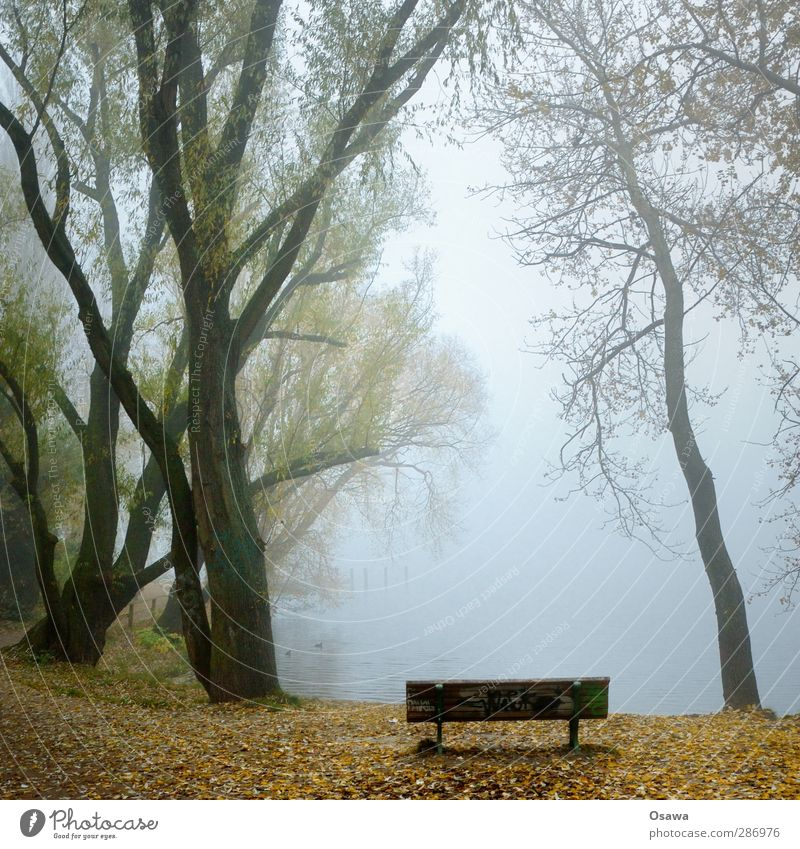 November Natur Pflanze Wasser Herbst Wetter Nebel Baum Park Küste Seeufer Flussufer Bucht Stimmung Blatt Bank Parkbank Baumstamm Ast kahl ruhig Grünpflanze