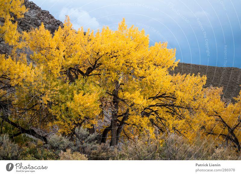 Tree on Fire Himmel Natur Pflanze Baum Blatt Landschaft Wald Umwelt Herbst Senior Idylle Perspektive ästhetisch Urelemente Kreativität USA