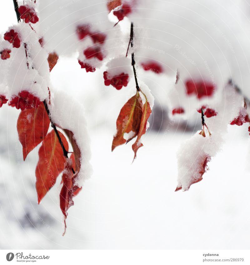 Rot-Weiß-Kontrast Umwelt Natur Herbst Winter Klima Klimawandel Eis Frost Schnee Baum Blatt ästhetisch Einsamkeit einzigartig Farbe Idylle kalt Leben ruhig schön