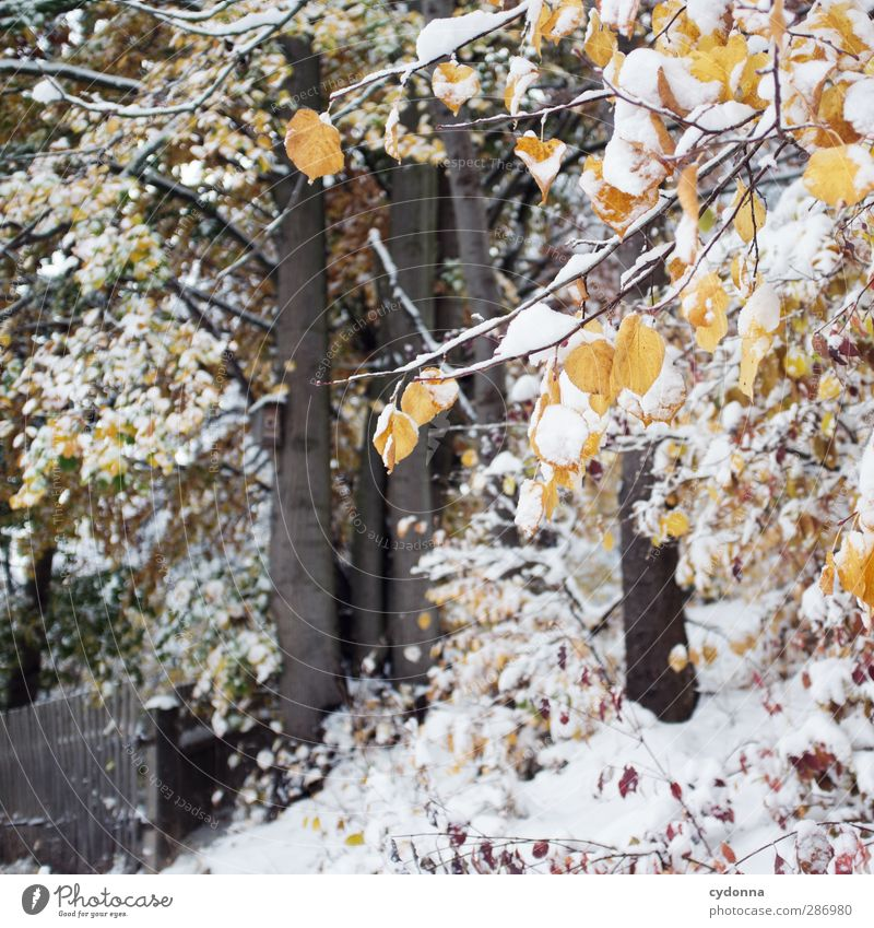 Winter im Herbst Natur schön Baum Blatt Einsamkeit ruhig Winter Landschaft Wald Umwelt kalt Herbst Leben Schnee träumen Eis