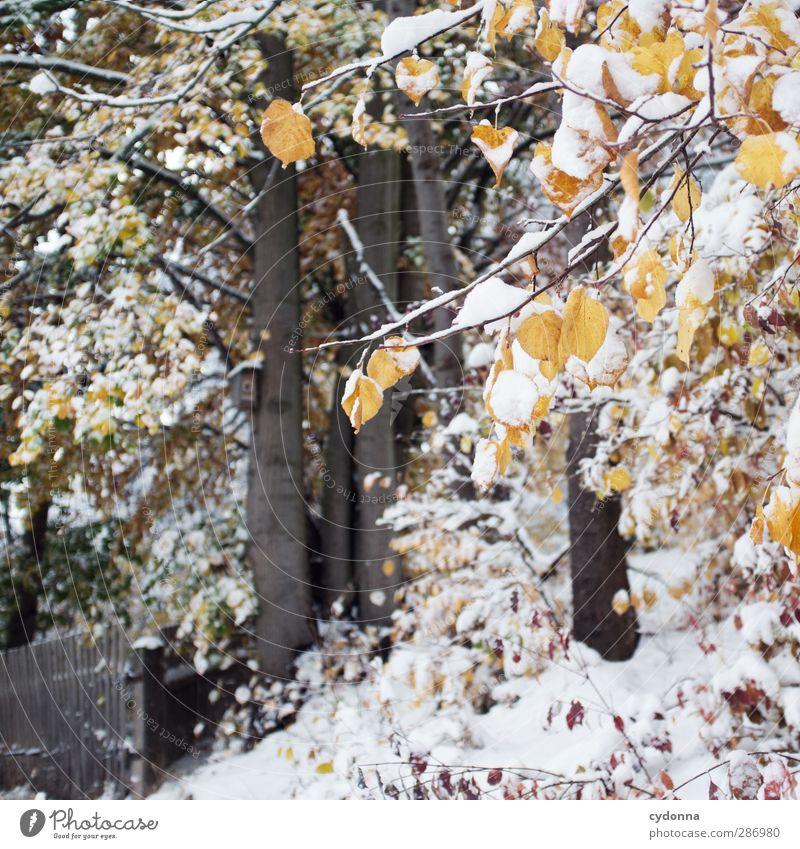 Winter im Herbst Umwelt Natur Landschaft Klima Klimawandel Eis Frost Schnee Baum Blatt Wald ästhetisch Einsamkeit einzigartig Idylle kalt Leben ruhig schön