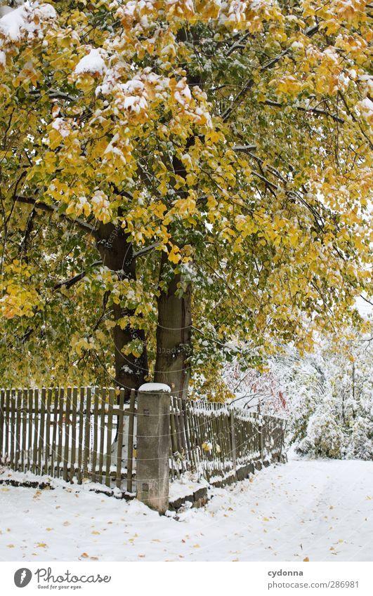 Wintereinbruch Natur schön Baum Farbe Einsamkeit ruhig gelb Umwelt kalt Herbst Leben Schnee Wege & Pfade Garten träumen