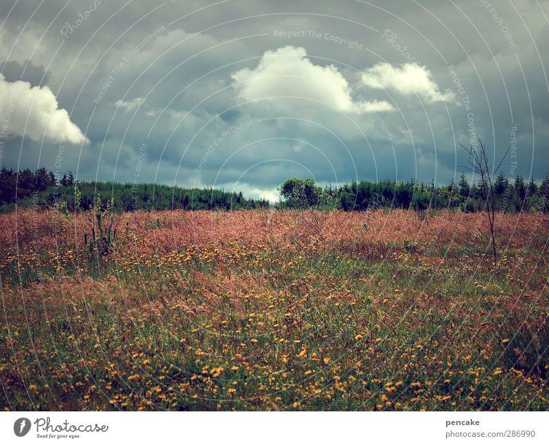 stormy weather Natur Sommer Wolken Landschaft Wiese Wetter Wind Klima Abenteuer Unwetter Sturm Gewitter Klimawandel Überleben Fjord Gewitterwolken
