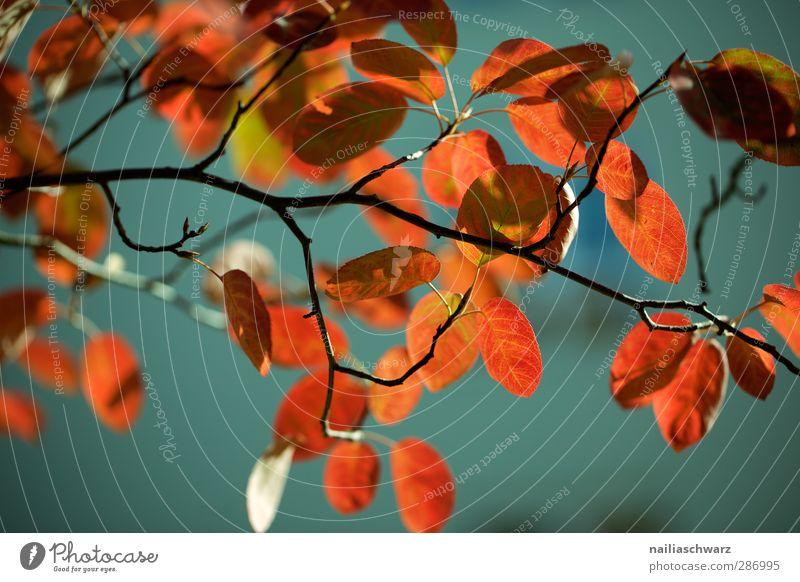 Herbstfarben Natur blau alt schön Pflanze Baum rot Blatt Umwelt Holz Garten Linie träumen Stimmung natürlich