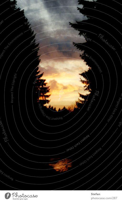From Dusk ... Baum Licht gelb rot schwarz Gemälde Tanne Nadelbaum Nacht Gegenlicht unheimlich bedrohlich Abend Licht Wolken