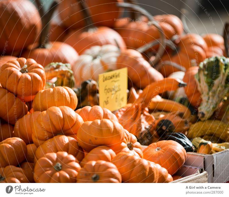 in abundance Lebensmittel Gemüse Kürbis Bioprodukte Vegetarische Ernährung Diät orange Herbst Dekoration & Verzierung verkaufen anbieten Angebot Marktstand
