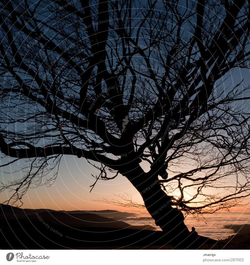 Still Standing Natur Ferien & Urlaub & Reisen schön Baum ruhig Landschaft Ferne Umwelt dunkel Berge u. Gebirge Herbst Leben Freiheit Horizont Stimmung Klima