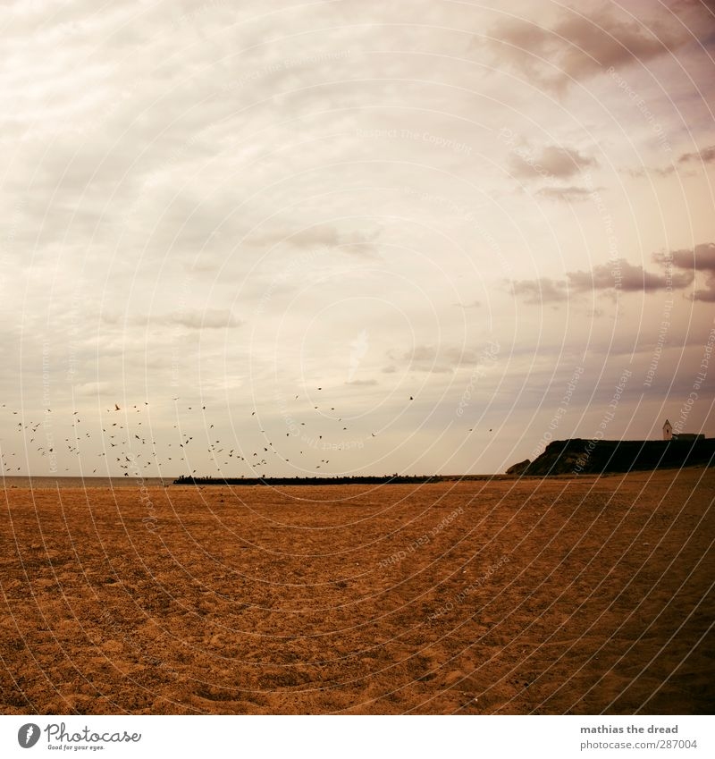 ROSAFLASH Umwelt Natur Landschaft Luft Wasser Himmel Horizont Schönes Wetter Wellen Küste Strand Meer Fischerdorf Menschenleer Kirche Bauwerk Gebäude Tier Vogel