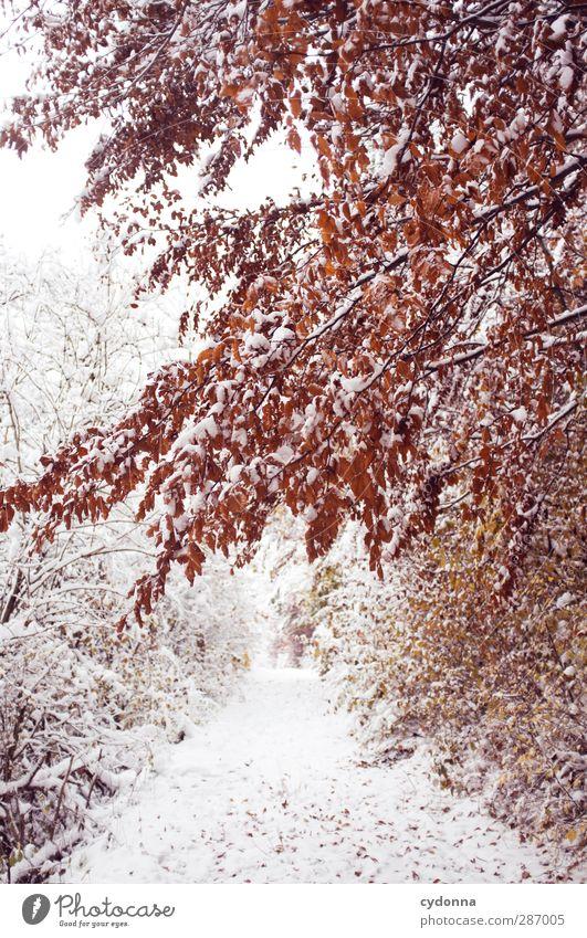 Warme Farben an kalten Tagen Natur schön Baum rot Einsamkeit ruhig Winter Landschaft Wald Umwelt Herbst Leben Schnee Wege & Pfade träumen