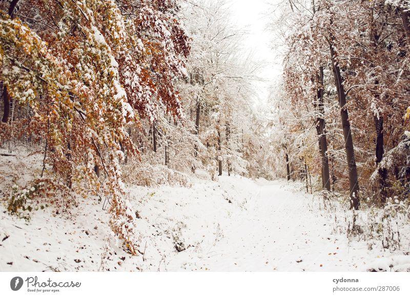 Warme Gedanken Umwelt Natur Landschaft Herbst Winter Klima Klimawandel Eis Frost Schnee Baum Wald ästhetisch Einsamkeit einzigartig erleben Idylle kalt Leben