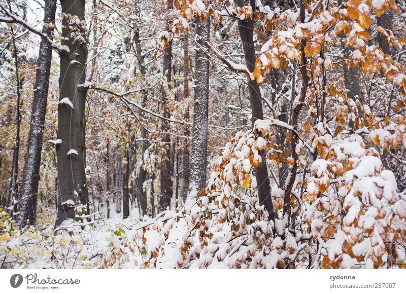Waldstück Umwelt Natur Herbst Winter Klima Klimawandel Eis Frost Schnee Baum ästhetisch Einsamkeit einzigartig entdecken Idylle kalt Leben ruhig schön skurril