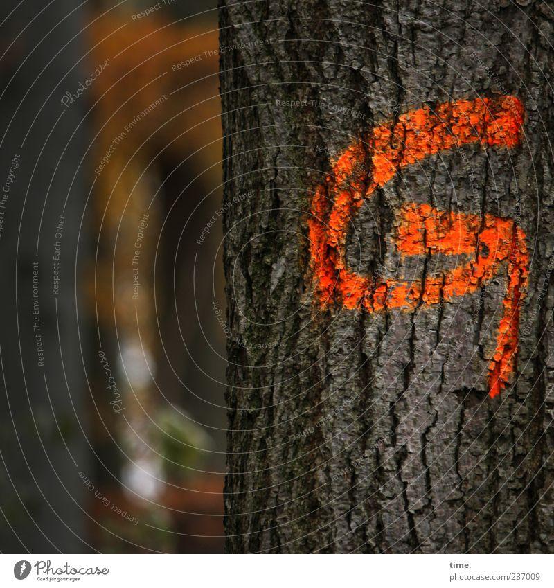 umkehren. bevor es zu spät ist.* Holzwirtschaft Forstwirtschaft Kunst Natur Baum Wald Farbe Zeichen Schilder & Markierungen G Pfeil dunkel natürlich orange