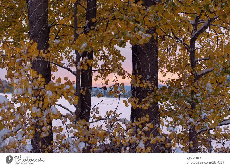 Blätterrauschen Natur schön Baum Farbe ruhig Winter Landschaft Umwelt Wiese kalt Herbst Leben Schnee Horizont träumen Eis
