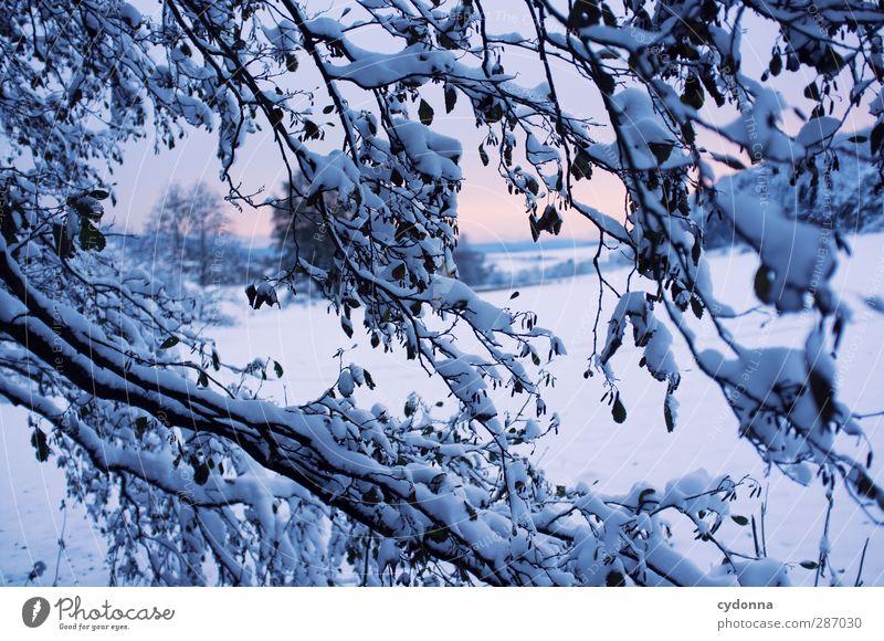 Kälteeinbruch Umwelt Natur Landschaft Sonnenaufgang Sonnenuntergang Winter Klima Klimawandel Eis Frost Schnee Baum Wiese ästhetisch Einsamkeit einzigartig