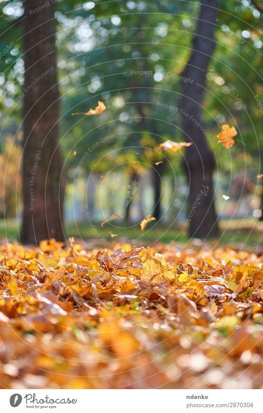 Herbststadtpark mit Bäumen und trockenen gelben Blättern Garten Umwelt Natur Landschaft Pflanze Baum Blatt Park Wald fallen hell natürlich gold grün Stimmung