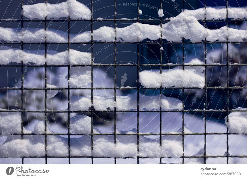 Durchs Raster gefallen Natur ruhig Winter Umwelt kalt Leben Schnee Freiheit Garten Linie Eis Ordnung Design ästhetisch Frost Wandel & Veränderung