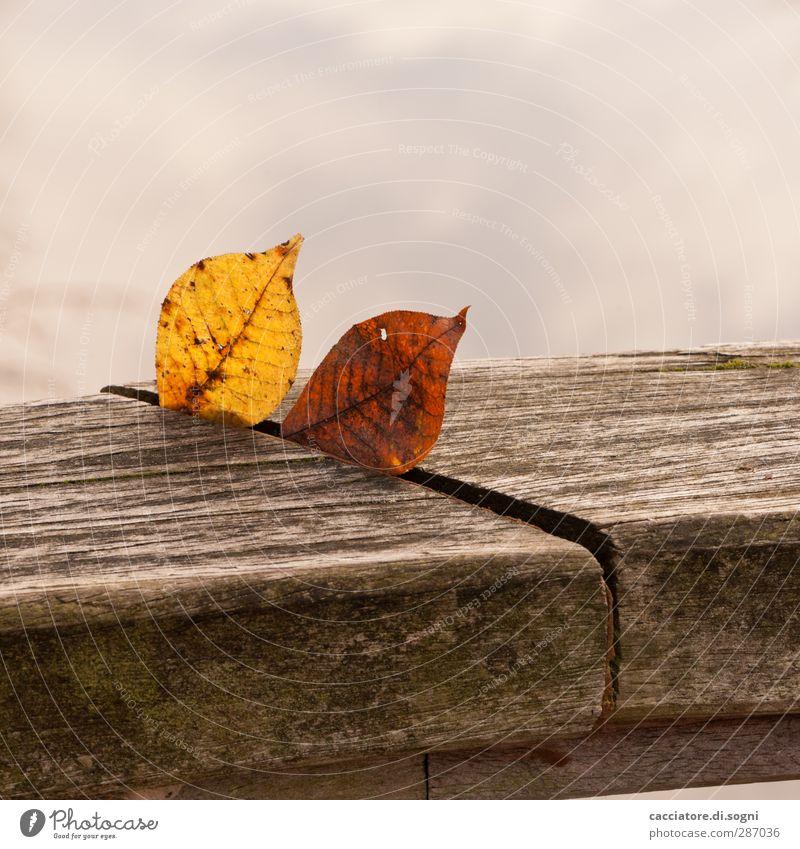 fugue in autumn flat minor Natur Blatt Einsamkeit ruhig Ferne Umwelt Herbst Stimmung braun Zusammensein natürlich Park Idylle ästhetisch trist