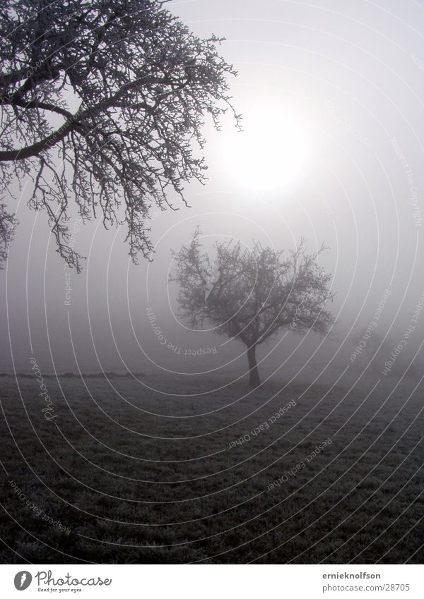 bäume im nebel Baum Sonne Feld Nebel