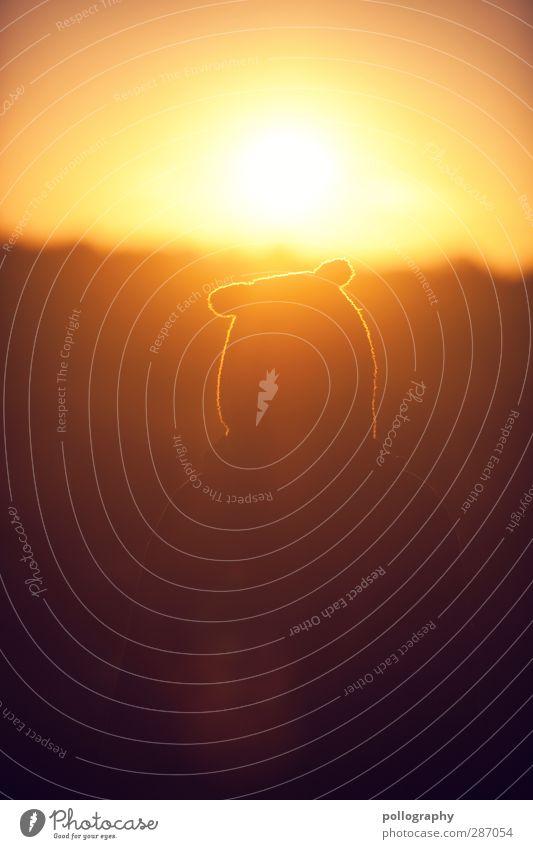 nicht hängen lassen... Morgen ist auch noch ein Tag! Ferne Sommerurlaub Sonnenbad Mensch Leben Kopf Ohr Wolkenloser Himmel Sonnenaufgang Sonnenuntergang