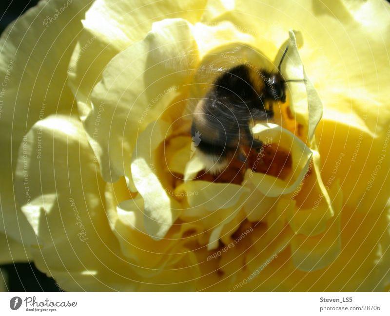 Hummel Verkehr - ein lizenzfreies Stock Foto von Photocase