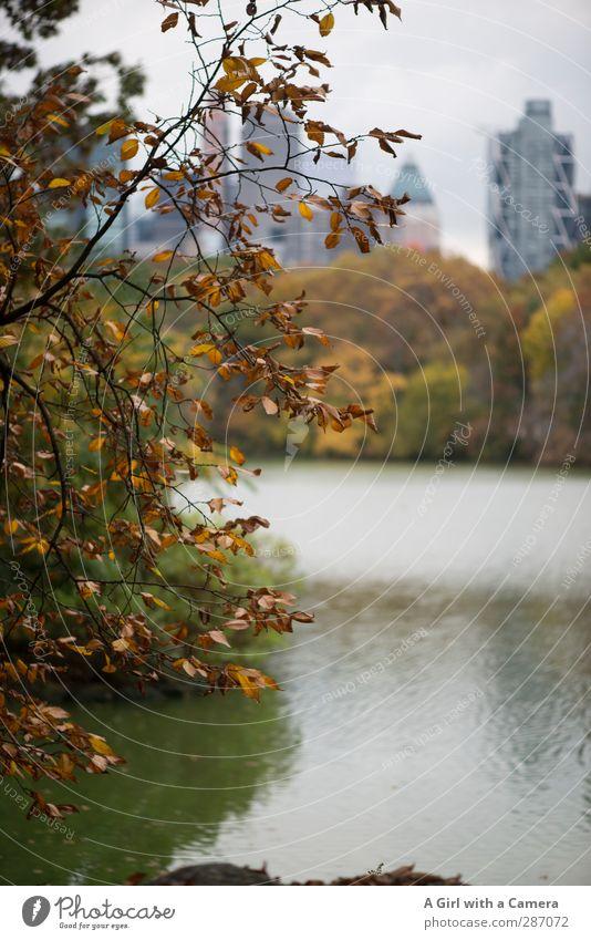 in the park Herbst Baum Blatt New York City Stadt Stadtzentrum Skyline Haus Fröhlichkeit mehrfarbig Seeufer Teich Gedeckte Farben Außenaufnahme