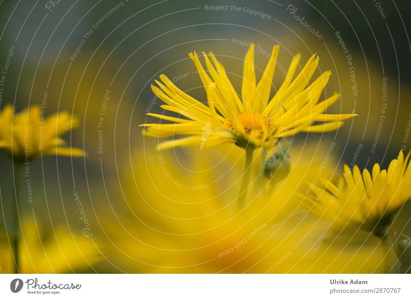 Gelbe Sommerblumen elegant Wellness harmonisch Wohlgefühl Zufriedenheit Erholung Meditation Spa Dekoration & Verzierung Tapete Bild Feste & Feiern Muttertag