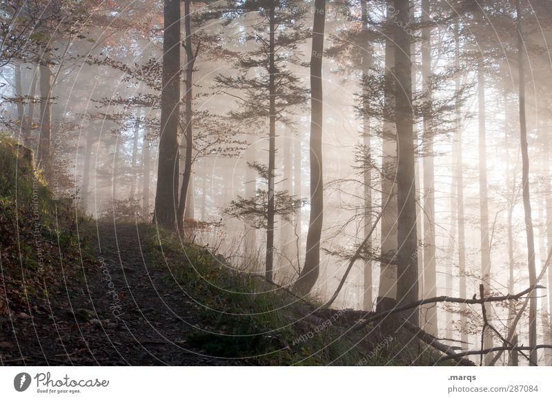 Anstieg Ausflug Umwelt Natur Landschaft Herbst Klima Nebel Wald Wege & Pfade frisch schön Wärme Stimmung Wandel & Veränderung Zukunft mystisch Religion & Glaube