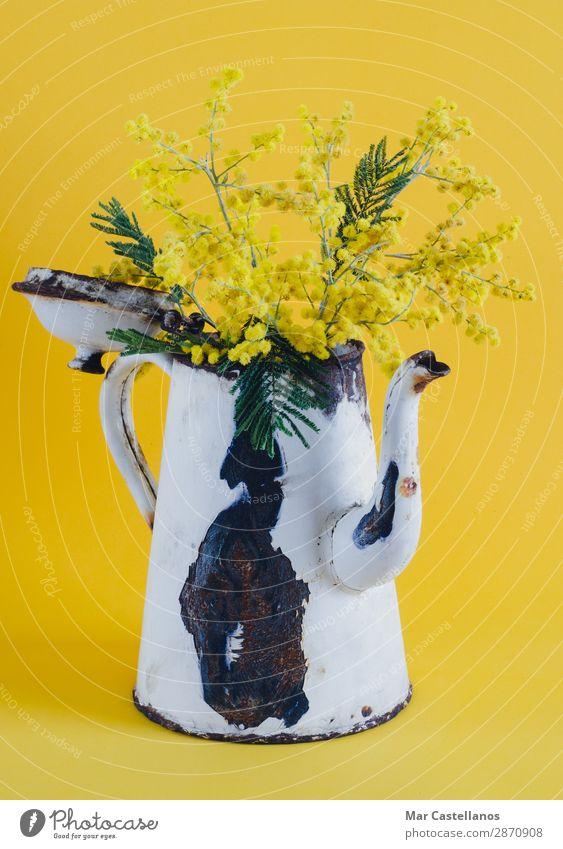 Natur alt Pflanze Farbe schön grün weiß Baum Blume Blatt Freude schwarz gelb Innenarchitektur Blüte Frühling