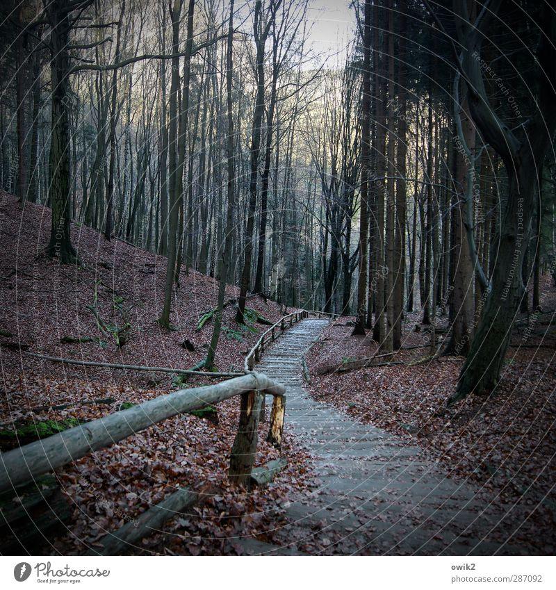 Hohle Gasse Ausflug Umwelt Natur Landschaft Pflanze Herbst Klima Wetter Schönes Wetter Baum Blatt Wald Laubwald Wege & Pfade Waldweg bedrohlich dunkel groß