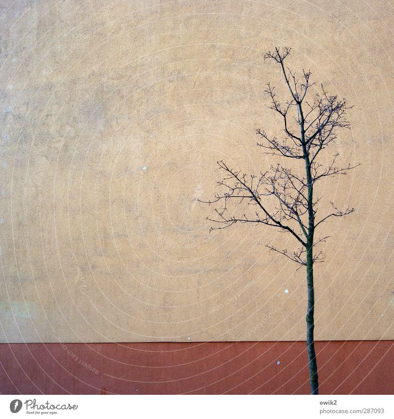 Stadtleben Umwelt Natur Pflanze Baum kahl karg dünn Mauer Wand einfach Farbfoto Gedeckte Farben Außenaufnahme Detailaufnahme Menschenleer Textfreiraum links