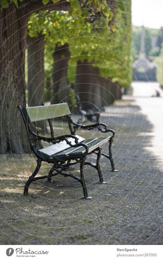Sommer im Park Schönes Wetter Pflanze Baum Stein Holz Metall ästhetisch grau grün Parkbank frei einladend Sitzgelegenheit Allee Baumreihe kiesbedeckt Kies
