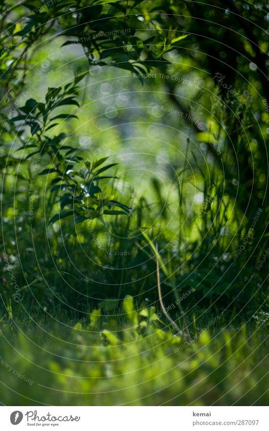Grüne Hölle Stuttgart Umwelt Natur Pflanze Gras Sträucher Grünpflanze Unkraut Garten Park Wiese Wachstum frisch grün Farbfoto Außenaufnahme Menschenleer Tag