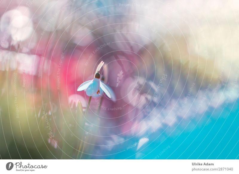 Schneeglöckchen, mal anders! elegant Stil Design Wellness Spa Dekoration & Verzierung Tapete Muttertag Ostern Natur Pflanze Frühling Blume Blüte leuchten Tanzen