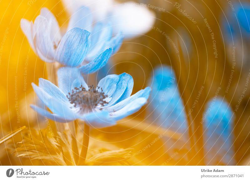 Blaue Garten-Anemonen elegant Design Wellness Leben harmonisch Wohlgefühl Zufriedenheit Erholung ruhig Meditation Kur Spa Tapete Feste & Feiern Valentinstag