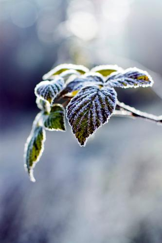 zucker Natur Pflanze Tier Blatt ruhig Winter Landschaft Wald Umwelt kalt Herbst Eis Idylle Frost
