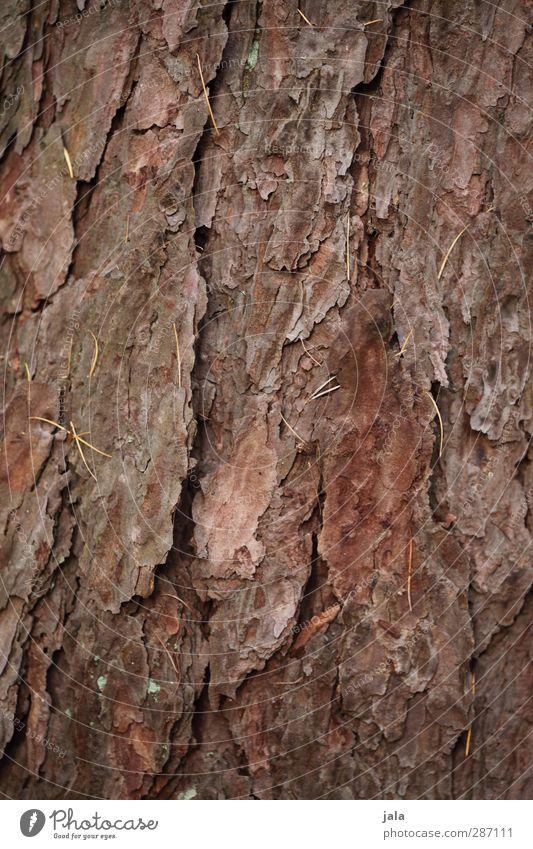 rinde Umwelt Natur Pflanze Baum natürlich braun Baumrinde Baumstamm Kiefer Farbfoto Außenaufnahme Menschenleer Textfreiraum links Textfreiraum rechts