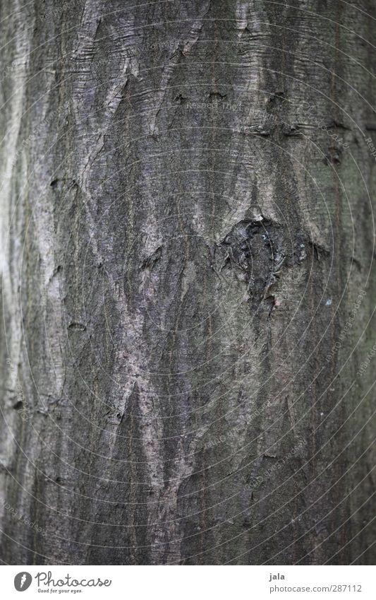 rinde Natur Pflanze Baum Umwelt Holz braun natürlich Baumstamm Baumrinde Hainbuche