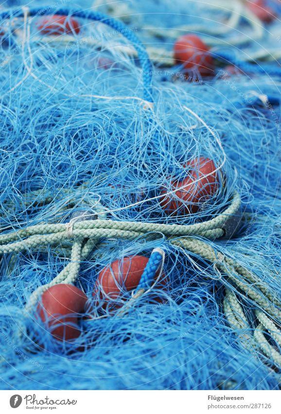 Sicher im Netz! Lebensmittel Fisch Meeresfrüchte Ernährung Essen Frühstück Wellen Küste Seeufer Flussufer Nordsee Ostsee Teich fangen Macht Tatkraft Angeln