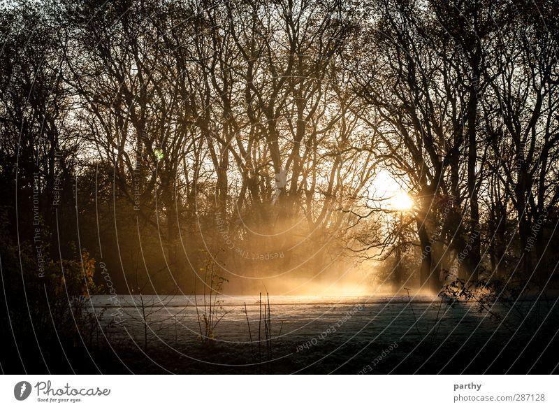 Light my Snow Winter Schnee Natur Herbst Nebel Eis Frost Baum Gras braun gelb gold schwarz Farbfoto Gedeckte Farben Außenaufnahme Morgen Morgendämmerung Licht