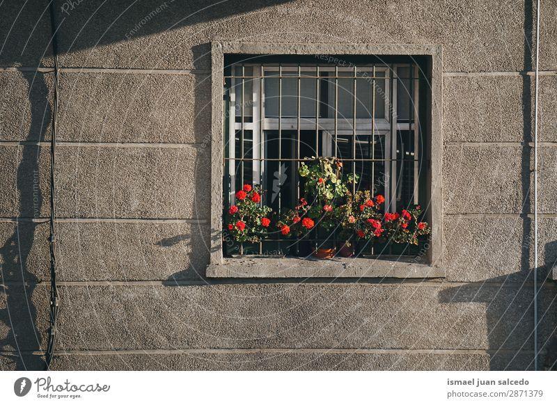 Pflanzen im Fenster im Haus Fassade Gebäude Balkon heimwärts Straße Großstadt Außenaufnahme Farbe mehrfarbig Strukturen & Formen Architektur Konstruktion Wand