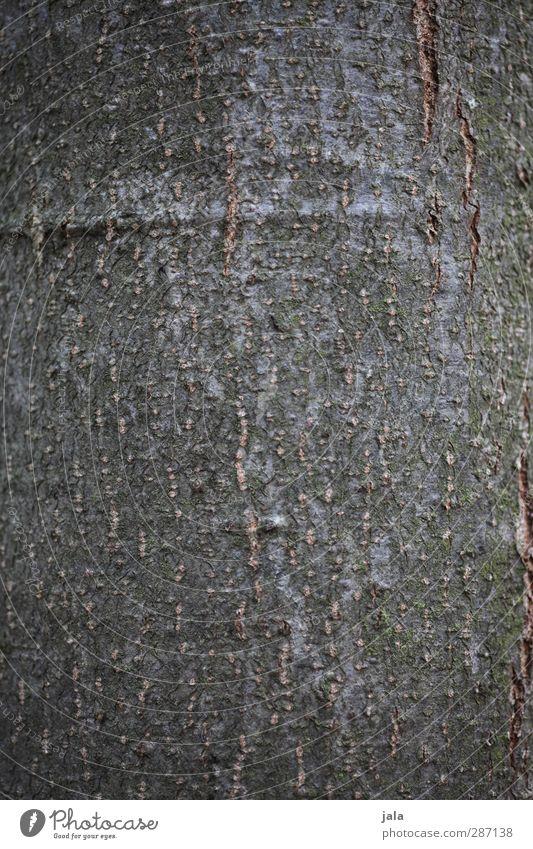 rinde Natur Pflanze Baum Umwelt braun natürlich Baumstamm Baumrinde