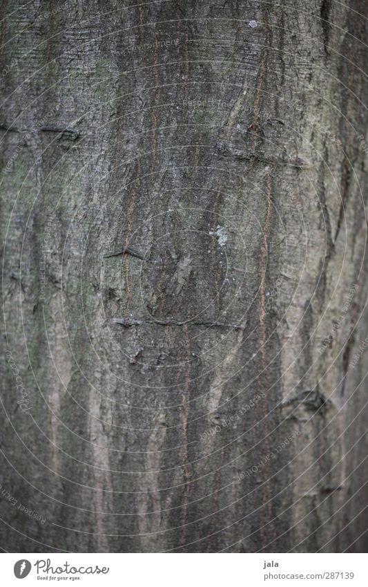 rinde Natur Pflanze Baum Umwelt braun natürlich Baumstamm Baumrinde Hainbuche
