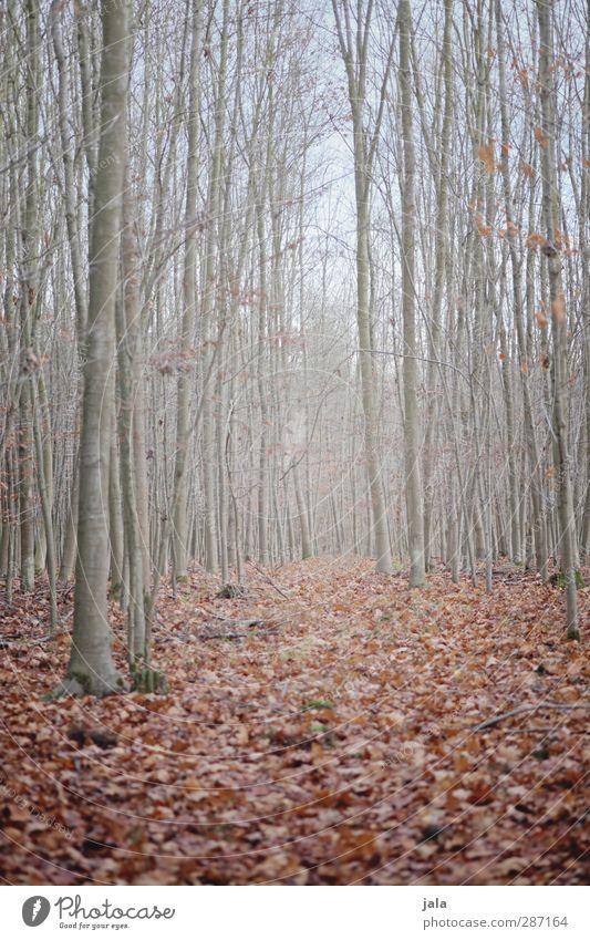 wald Himmel Natur Pflanze Baum Blatt Landschaft Wald Umwelt Herbst braun natürlich trist kahl
