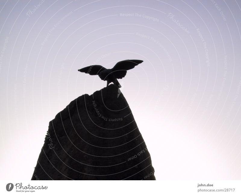 The Eagle has landed Vogel Felsen geheimnisvoll obskur Adler