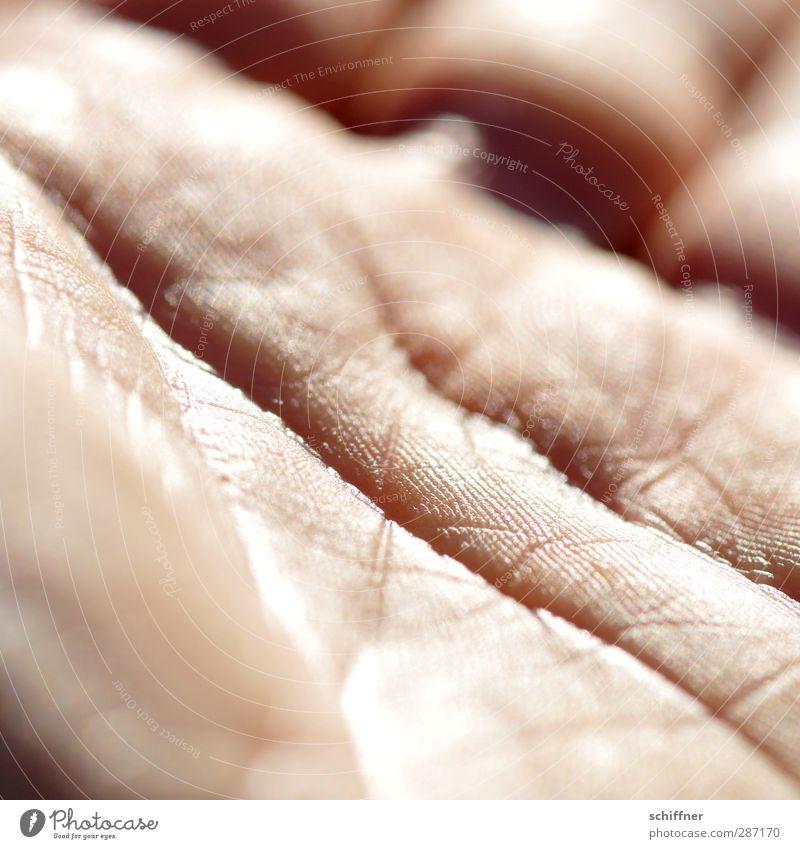 Zeitgräben Mensch Haut Hand Finger authentisch Handfläche einzigartig Falte Hautfalten Sonnenlicht Wassergraben Lebenslinie Zukunft handlesen Wahrsagerei