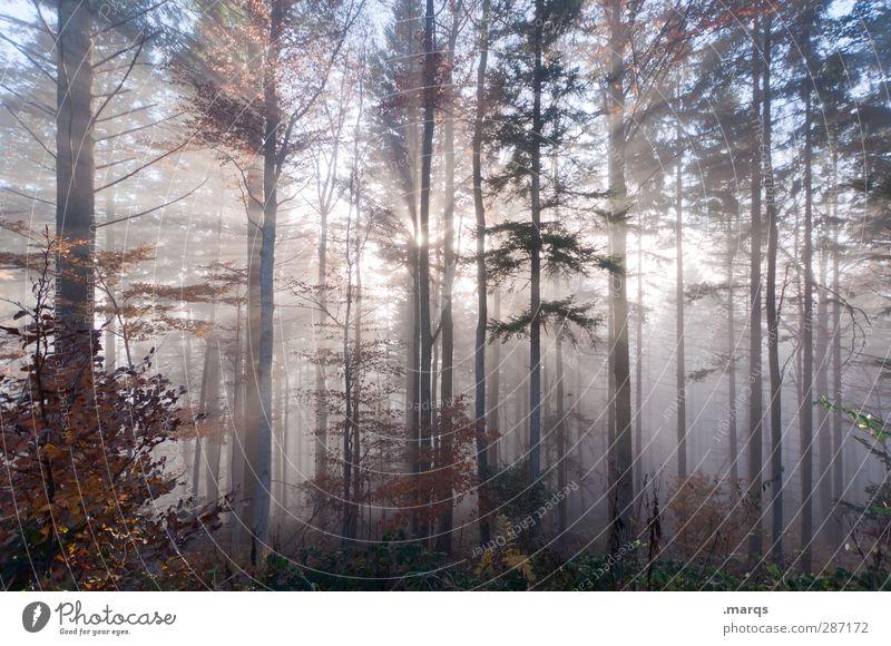 Erscheinung Natur schön Sommer Landschaft Wald Umwelt kalt Herbst Leben Religion & Glaube Stimmung außergewöhnlich Klima Nebel Beginn leuchten