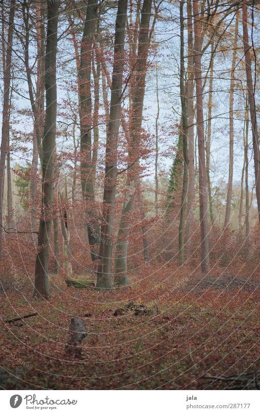 herbst Himmel Natur Pflanze Baum Blatt Landschaft Wald Umwelt natürlich Sträucher Wildpflanze