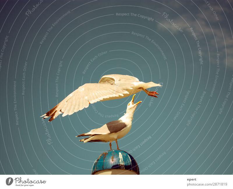 Hey, du Vogel! Tier 2 fangen fliegen kämpfen Konflikt & Streit Eifersucht Misstrauen Neid Entschlossenheit Möwe Meer Farbfoto Außenaufnahme Textfreiraum links