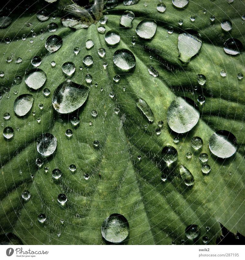 Körnerpark Umwelt Natur Pflanze Wassertropfen Klima Schönes Wetter Regen Blatt berühren glänzend leuchten dünn Flüssigkeit frisch klein nah nass natürlich rund