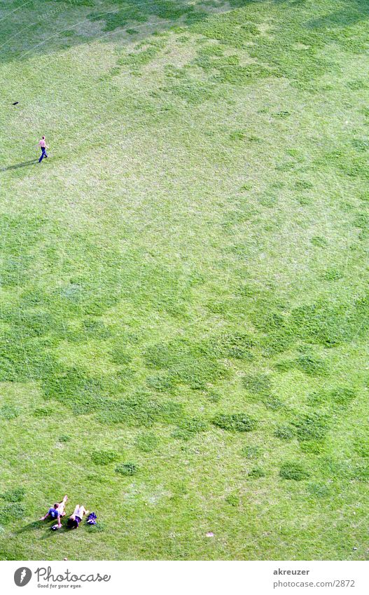 glück Gras Menschengruppe Paar hoch paarweise